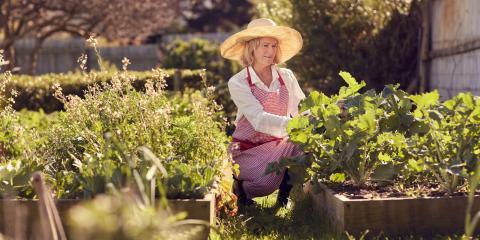 3 Easy Vegetables for Beginner Gardeners, Colerain, Ohio