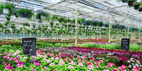 What You Need to Know About Garden Nurseries, Hamilton, Ohio