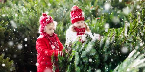 3 Compelling Reasons to Get a Real Christmas Tree, Bethel, Ohio