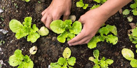 Gardening Tips: When to Plant Vegetables in Southern Ohio & What to Grow, Fairfield, Ohio
