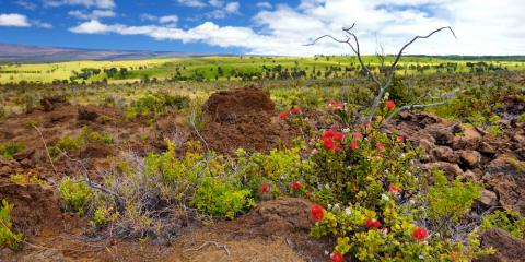 Gardening Store Shares a Comprehensive Guide to Native Hawaiian Plants, Hilo, Hawaii