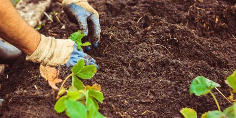 3 Ways to Keep Pests Out of Your Garden, Statesboro, Georgia