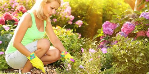 3 Tips For Gardening In Hawaii, Hilo, Hawaii