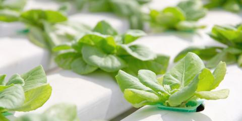 3 Tips for Starting a Hydroponics Garden , Denver, Colorado