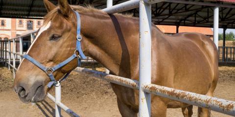 How to Prepare Your Horse Farm for Winter, Whiteville, Arkansas