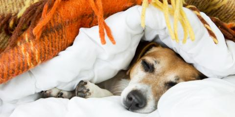 What to Know About Pet Hospice Care, Atlanta, Georgia