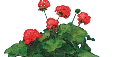 1st Ever Geranium Fest at BSJ Corporation's Shelby Terrace - May 6, La Crosse, Wisconsin