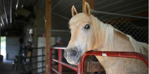 How to Properly Use Wood Shavings for Horse Bedding, Hallandale Beach, Florida