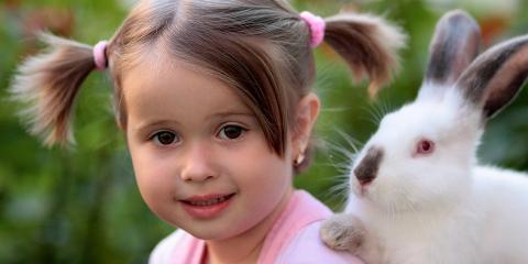 Learn Rabbit Care Basics From Honolulu's Premier Pet Hospital, Honolulu, Hawaii