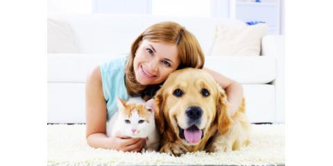 Get Rid of Carpet Stains Left By Your Pets With Carpet Cleaning Services From Omega Chem-Dry, Gaithersburg, Maryland