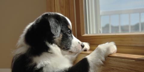 3 Tricks for Removing Dog Saliva From Your Glass Windows & Doors, Greece, New York
