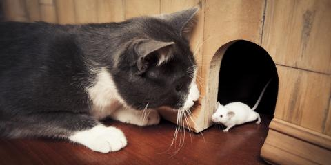 5 Signs of a Mouse Infestation In Your Home, 2, Maryland