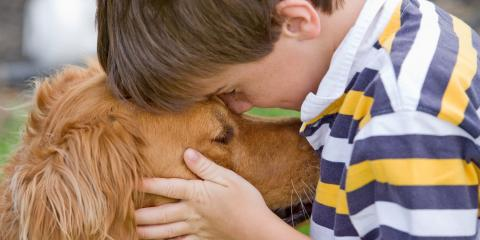 Who Gets the Pet After a Divorce? , Goshen, New York