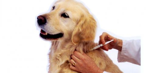 3 Most Important Vaccines for Your Dog, Cincinnati, Ohio