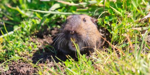 Why Should You Only Use Natural Gopher Control Solutions?, Sutter Creek, California