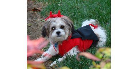 Happy Halloween - MelindaNunleyRealtor.com, Midway, Kentucky