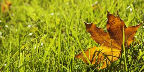 Your Ultimate Guide to Fall Lawn Care, Danbury, Connecticut