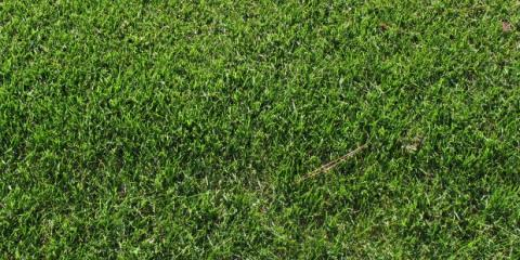 Increase Your Property Value & Ward Off Pests With Proper Grass Care, Anchorage, Alaska