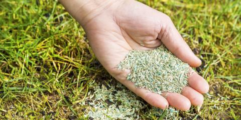 3 Factors to Consider When Deciding Between Grass Seed & Sod, St. Peters, Missouri
