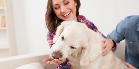 3 Tips to Combat Pet Odors at Home, Rochester, New York