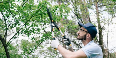 3 Reasons to Include Tree Trimming in Spring Cleanup, Dayton, Ohio