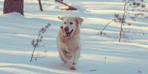 Grayson Insurance Agent Shares Winter Pet Safety Tips, Flatwoods-Russell, Kentucky