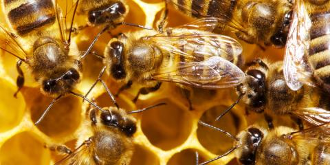 Bees vs. Wasps: Your Local Exterminator Explains the Difference, Hebron, Kentucky