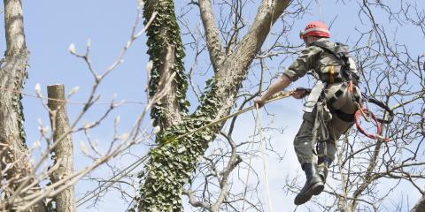 4 Benefits of Regular Tree Pruning, Anchorage, Alaska