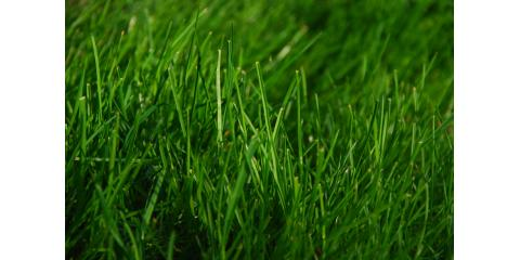 7 Tips for Keeping Your Yard Green Without Doubling Your Water Bill, Wisconsin Rapids, Wisconsin