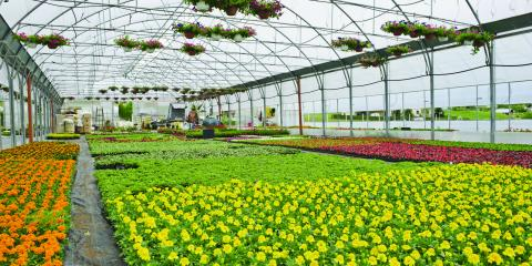 Pansy Flat Sale Northgate Greenhouses Colerain Nearsay