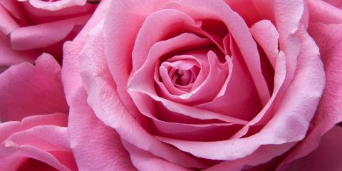 5 Popular Flower Shop Selections & Their Meanings, Greensboro, North Carolina