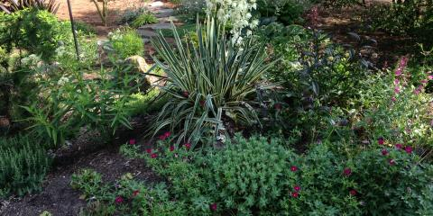5 Plants That Are Made for the Shade, Greensboro, North Carolina