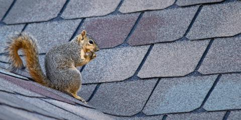 How Squirrels Can Damage Roofs, Greenwood Village, Colorado