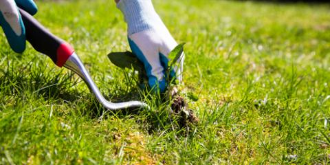 What Preventative Weed Control Methods Are Best for Spring?, Whiteville, Arkansas