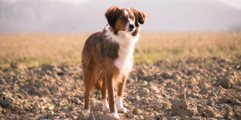 When to Spay or Neuter Your Pet: Waxhaw Groomers Explain, Waxhaw, North Carolina