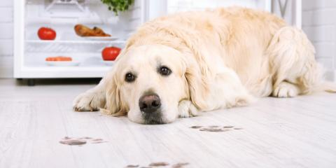 3 Maintenance & Grooming Tips for a Clean & Pet-Friendly Home, Churchville, New York