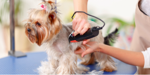 How Often Should Your Pet Receive Pet Grooming Services?, Kingman, Arizona