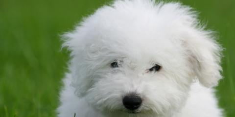 4 Dog Grooming Tips for Your New Puppy, Miami, Ohio