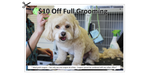 $10 Off Full Grooming , Manhattan, New York
