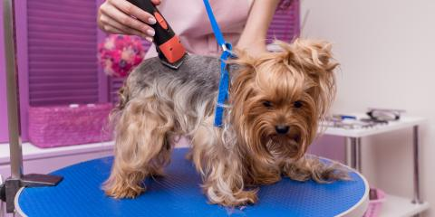 5 Ways to Reduce Your Dog's Fear of the Groomer, Churchville, New York
