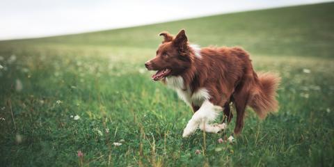 4 FAQ About Ticks & Dogs, Newport-Fort Thomas, Kentucky