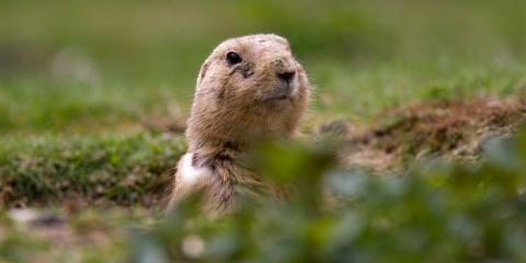 3 Ways Groundhogs Can Damage a Property, Miami, Ohio