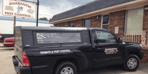 How to Choose the Best Pest Control Company, Lexington-Fayette, Kentucky