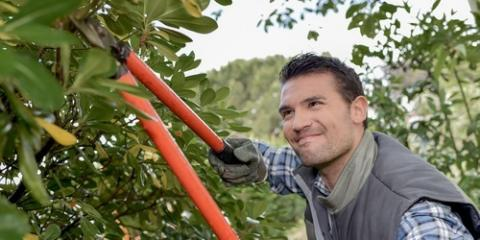 How an Arborist Keeps Your Trees Healthy, Guilford, Connecticut