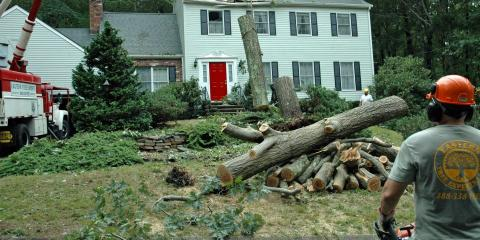 4 Telltale Signs You Need Tree Removal, Guilford, Connecticut