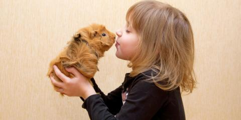 5 Tips for Owning & Caring for Guinea Pigs, Ewa, Hawaii