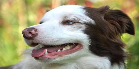 4 Pet Dental Care Products Your Dog Will Love, Gulf Shores, Alabama