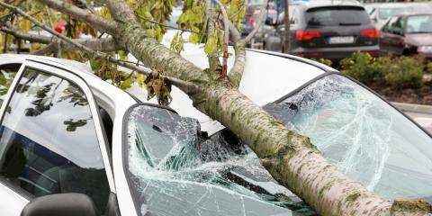 Madison Auto Body Repair Experts Explain What to Do if a Tree Falls on Your Car, Madison, Ohio
