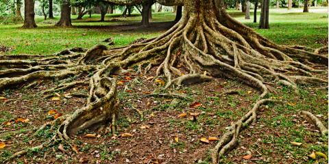 Could Tree Roots Be the Cause of Your Clogged Drain?, Watertown, Connecticut