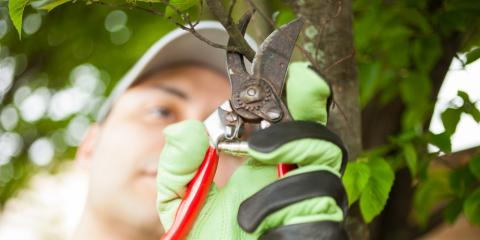 3 Reasons to Invest in Professional Tree Pruning, New London, North Carolina